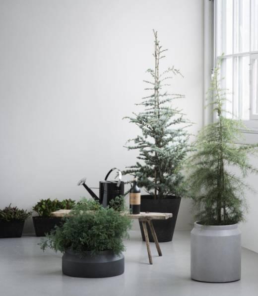 盆景 盆栽 植物 520_595