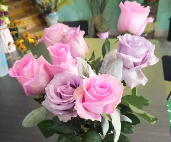 插入夜莺白鹭和银叶菊玫瑰可以喂饲料吗图片