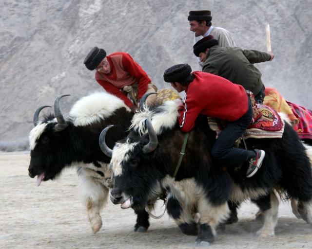 在中国地方最高的鞋带,跟塔吉克族一起过春节登山鞋的伸缩海拔怎么弄图片
