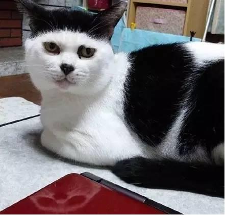 猫也能剪空气刘海?简直了.图片