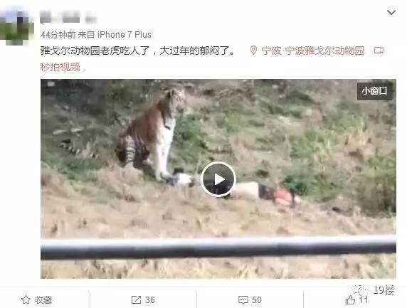 宁波一动物园发生老虎咬人事件
