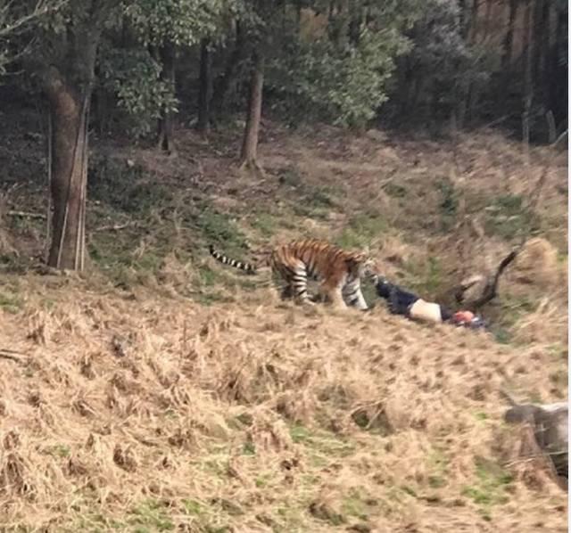 宁波雅戈尔动物园下午发生老虎咬人事件!