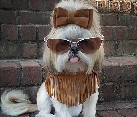 为你的头型打造萌宠宠物吧!董卿现在的发型图片