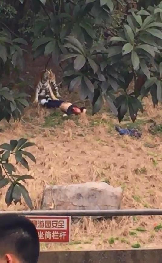 宁波发生动物园老虎咬人事件