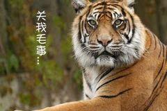 老虎和蛇在一起的图片