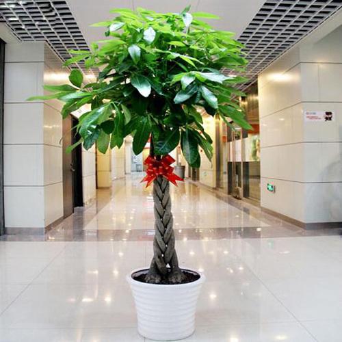 正月初二 发财树祭财神