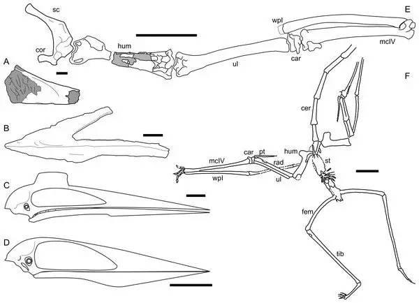 科学家发现神龙翼龙化石