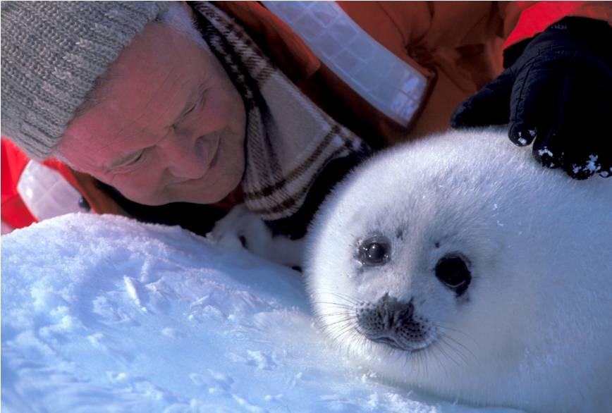 早春三月,我与竖琴海豹有个约定图片