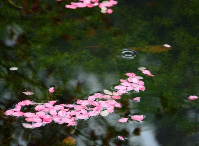 比《三生三世》还要好看的桃花林,就在广州!