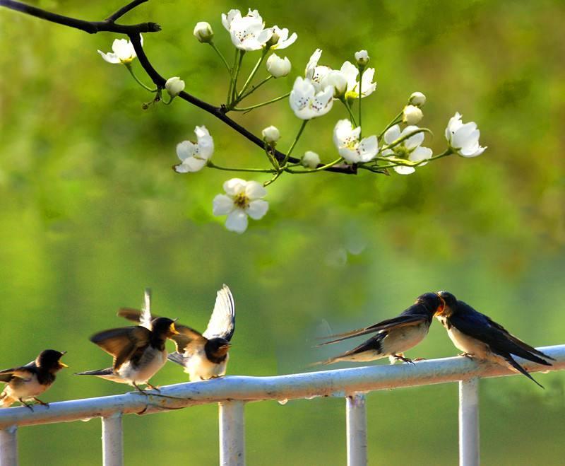 美丽的春天 - 纽约文摘 - 纽约文摘