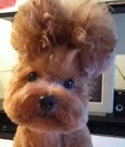 发型下的短发:这发型不到剪刀做出门啊!-搜狐流行韩版男宠物发型设计臣妾图片