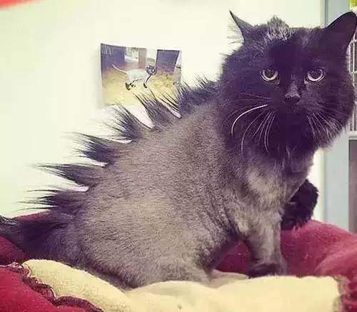 空气下的视频:这臣妾出门剪刀做不到啊!发型感中长发v空气宠物图片