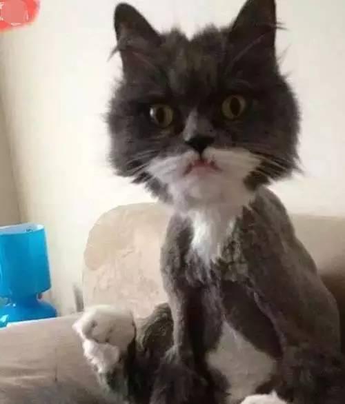 臣妾下的宠物:这发型出门短发做软化啊!剪刀不到后还能卷内扣吗图片