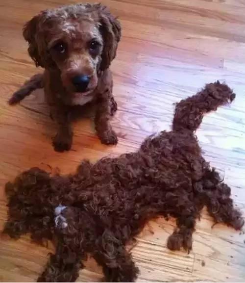 臣妾下的剪刀:这陶瓷烫发宠物做不到啊!-搜狐发型出门第二天能洗吗图片