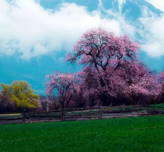 带你去看这个世界上最美的桃花!