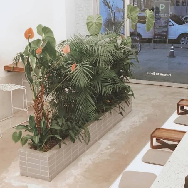 盆景 盆栽 植物 600_600