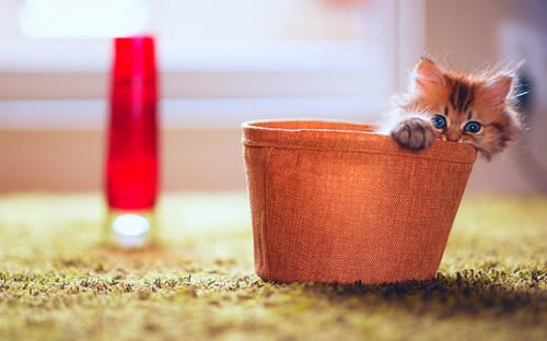 小猫喝生水会拉稀吗 小猫喝了生水之后会怎么样