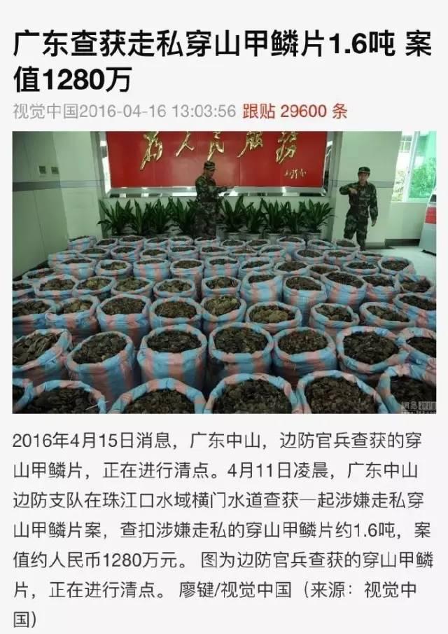 为什么中国专家不研究穿山甲?因为,早被吃没了。