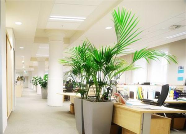 办公室养花选什么花合适