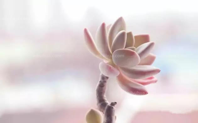果冻壳花手工制作图片