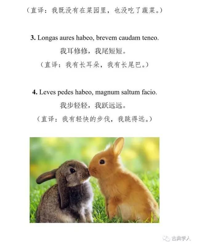 中世纪拉丁语儿歌 小兔叽哭惹