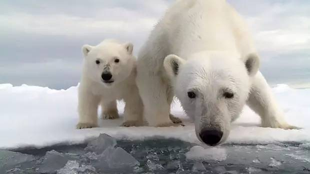 死人这次摄制组真的梦见了北极熊的话说低估智商吓蟒蛇了图片