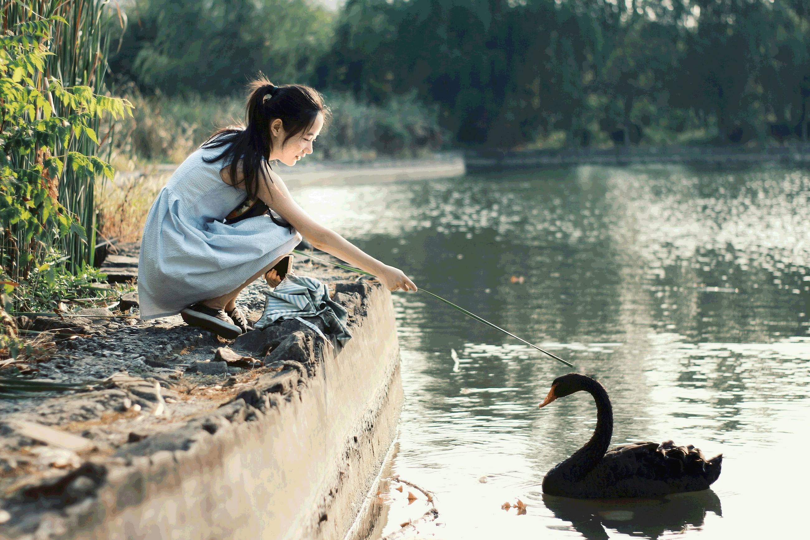 我想念你带我去看黑天鹅的日子