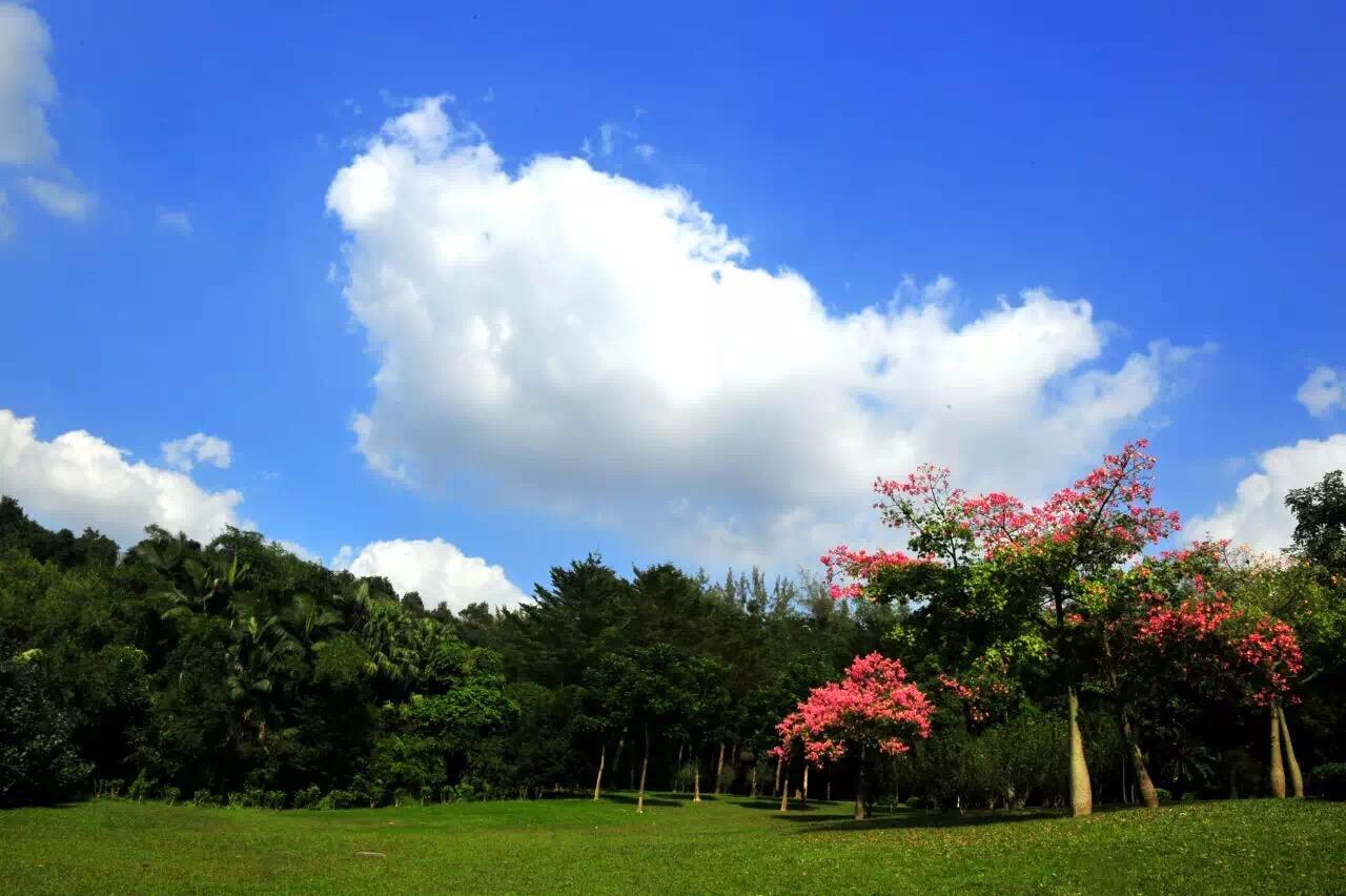 春天来了!到深圳这些公园野餐吧!附装备/美食全攻略