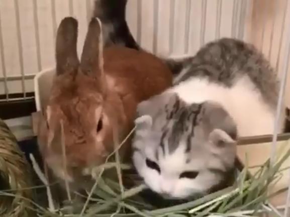 猫咪趣味GIF视频第二期