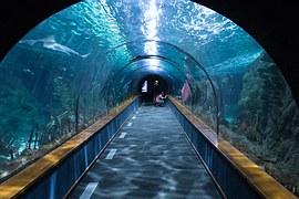 词根aqua(水)的记忆办法分享