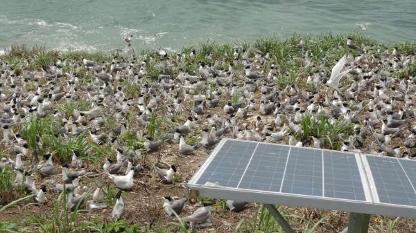 浙江自然博物馆征无人岛海鸟监测者:其实不诗意,图好玩的别来