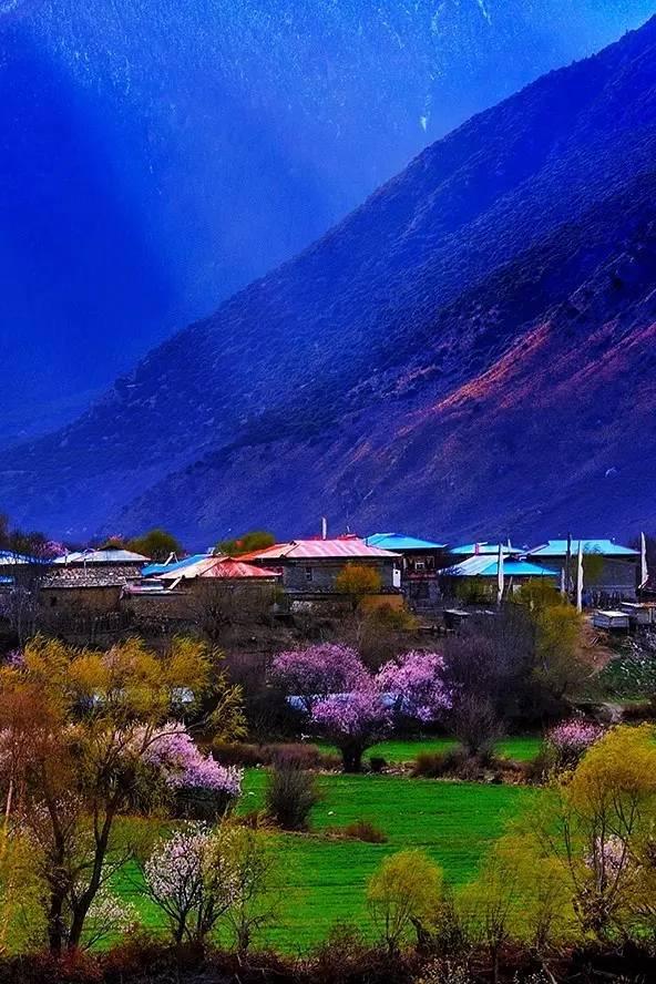 三生三世十里桃花,在西藏林芝,静待花开