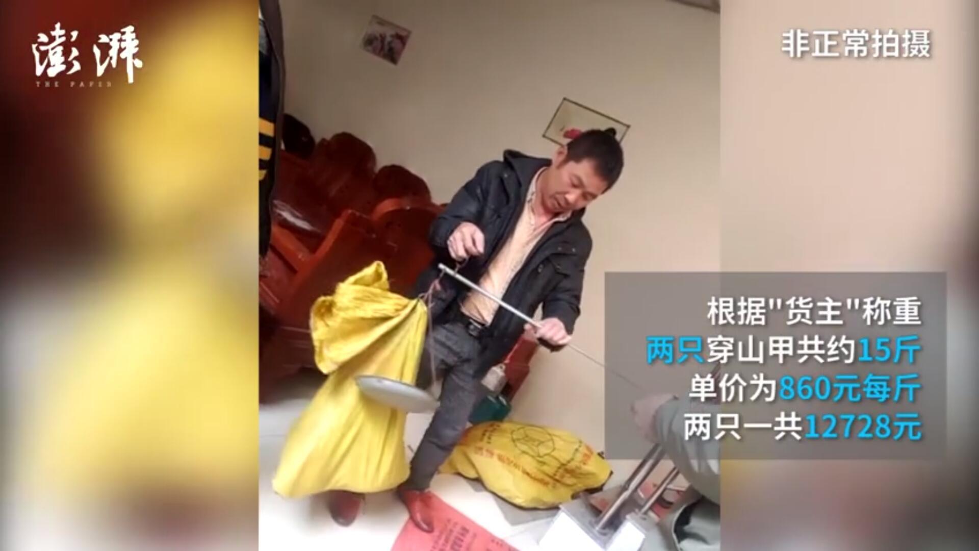 穿山甲研究专家:中华穿山甲比大熊猫珍贵,很多人吃是为炫耀 - 梅思特 - 你拥有很多,而我,只有你。。。