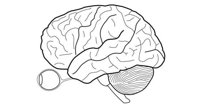 这样,整个大脑实际上是获得了4个独立不完全的视野部分.图片