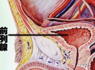 腺+��\y��9��y�n�fa_前列腺为什么这么容易受伤害呢?