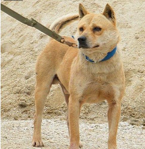 缺爱的宠物,它们有多可怜 中华田园犬正在消亡
