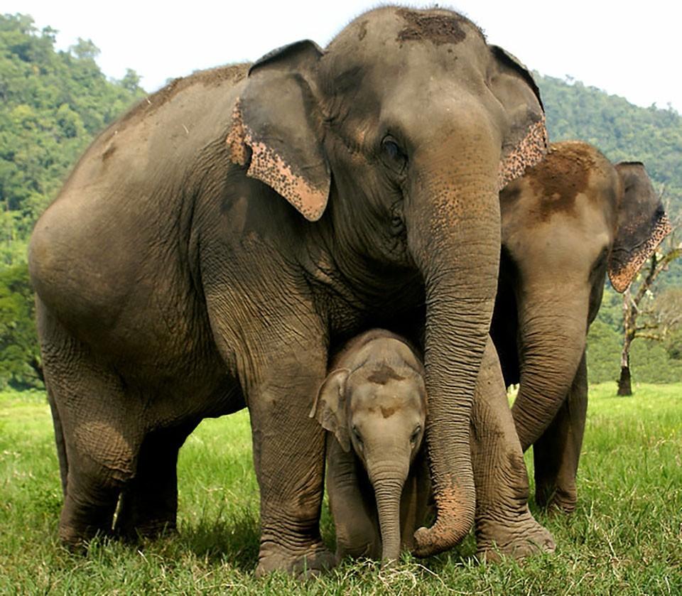 禁播的黄网_被泰国网站禁播,这就是大象旅游业背后的残酷真相