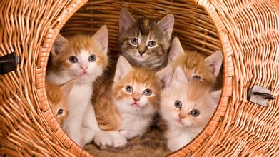 幼猫洗澡用什么比较好?_幼猫洗澡死了_幼猫洗澡水温