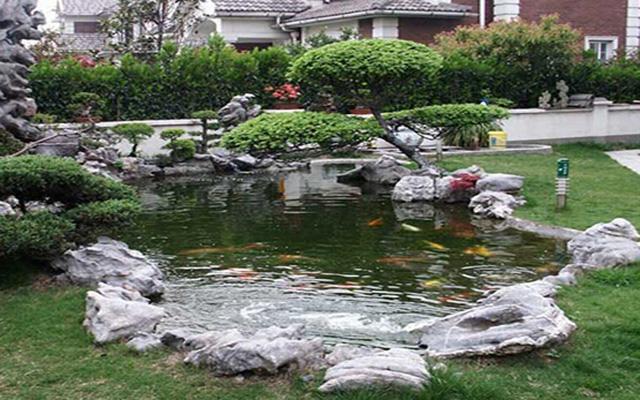 这里要提醒大家的是,庭院鱼池最好不要设计成葫芦形或弦月形,更不图片