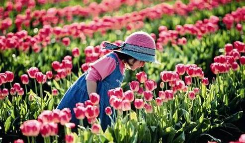 在阳春三月的日子里,你不妨去这些地方走走看看!图片