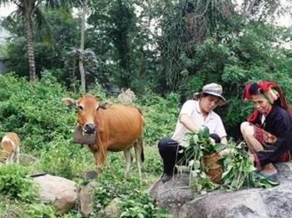 这小野草是农民致富新项目促消朱丽安娜 古尔三级化降三高关键能抗癌