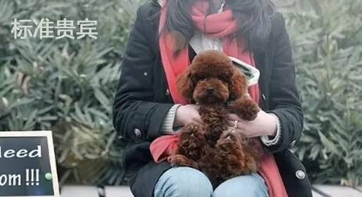 中国最受欢迎狗狗排名:最受欢迎的十种狗狗排名