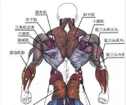 俯卧撑练胸肌效果好吗_俯卧撑能练胸肌吗_俯卧撑做多少合适 练胸肌