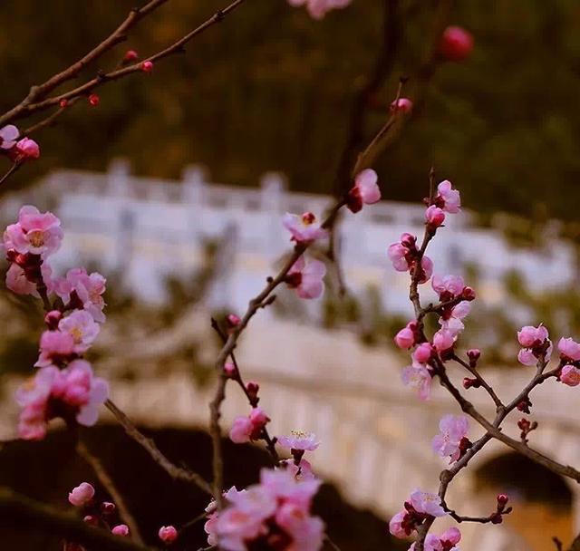三生三世十里桃花,三月的繁花