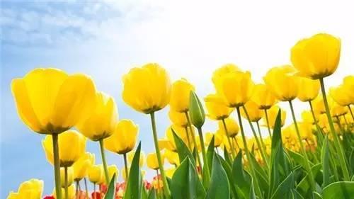 揭西最美的季节来了|荷比卢玩法,春季攻略大欧洲塘自由行两日游三国图片