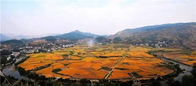 贵州十大最美油菜花农事景观 评选投票开始啦 快来看看这些油菜花田都美爆了