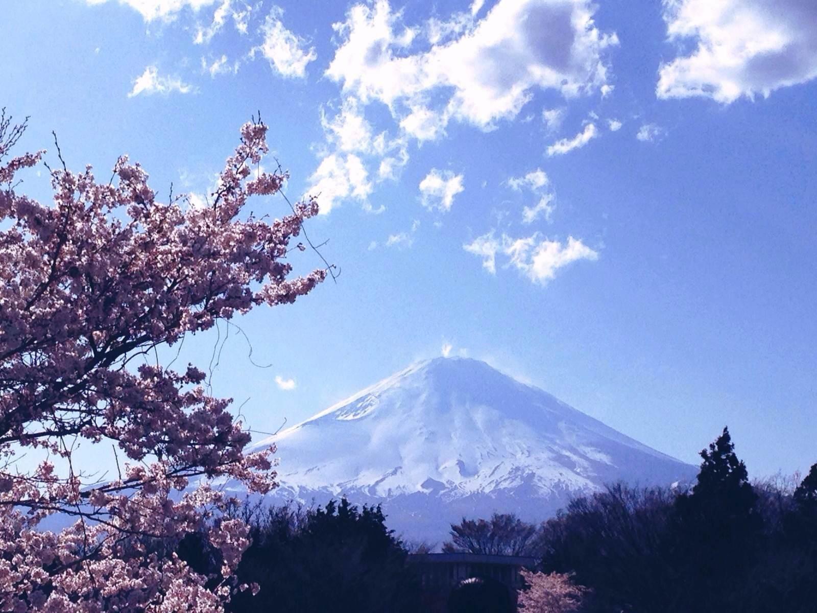 办理日本签证最快需要多久?所需材料有哪些?