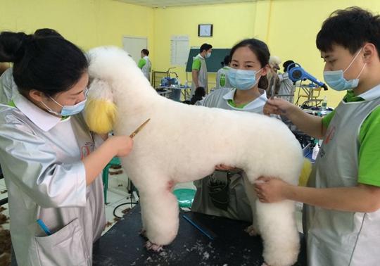 宠物美容师培训中心-宠物美容师学习班-河南波比家宠物美容培...