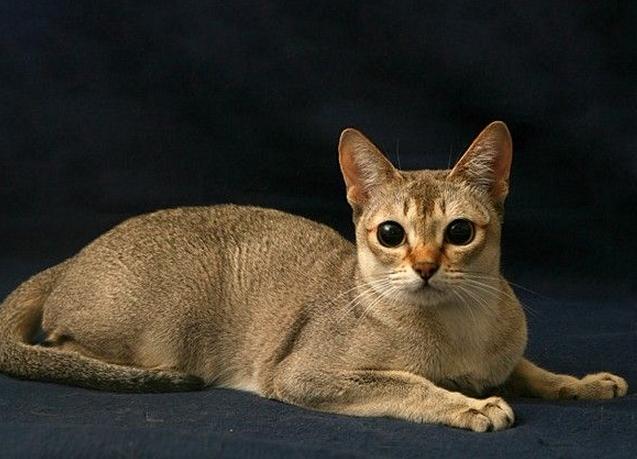 猫膀胱结石怎么办图片