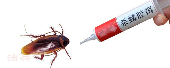 如何有效徹底滅絕家中的蟑螂|技術常識-乾坤生物蟲控有限公司